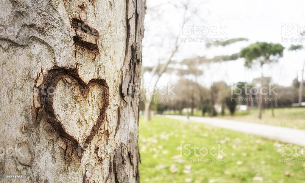 Heart shape carved on a plane tree, Rome Italy stock photo