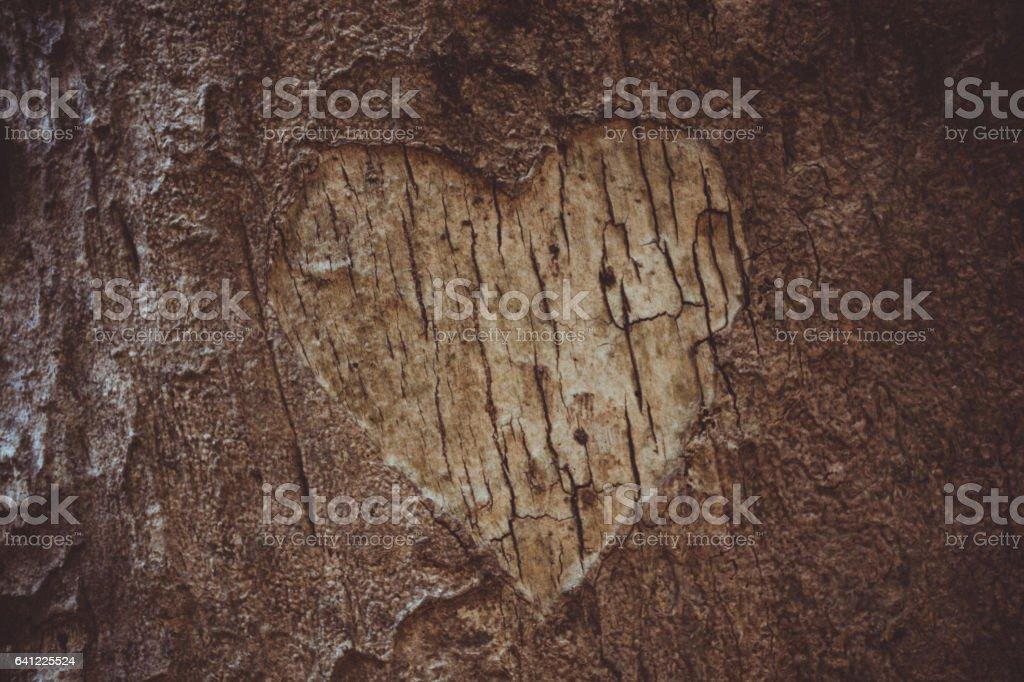 Heart Shape Carved On Tree Bark stock photo