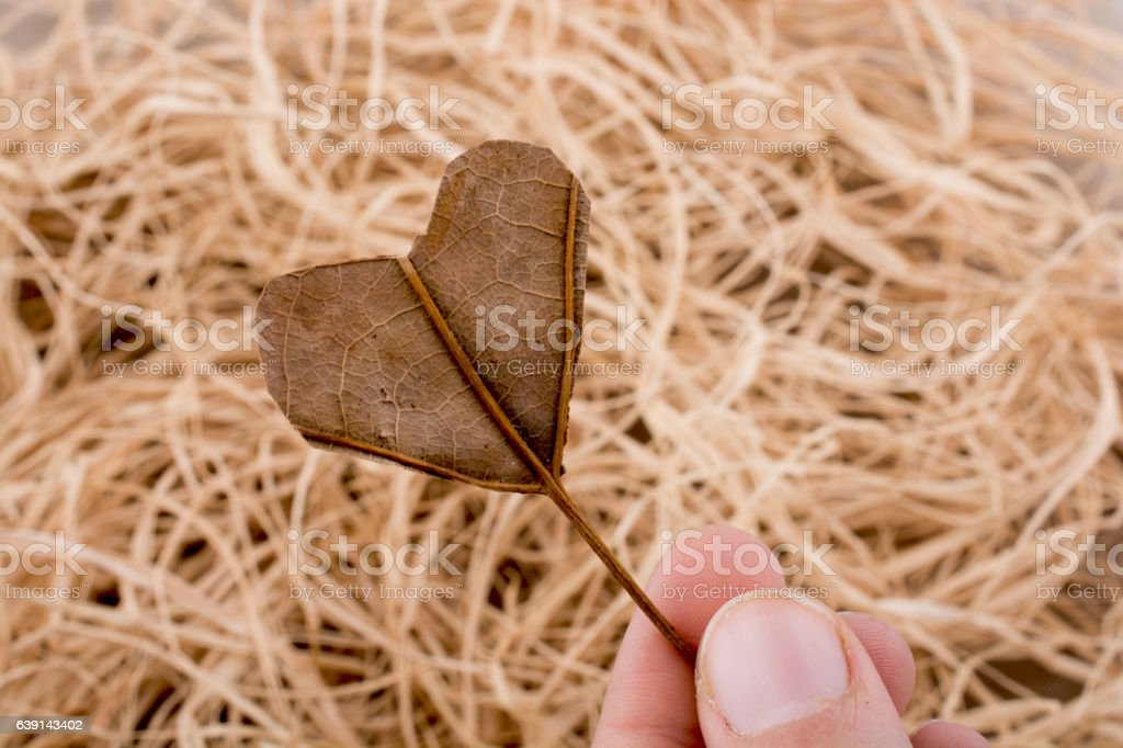 Heart shape cut leaf  in hand on a background stock photo
