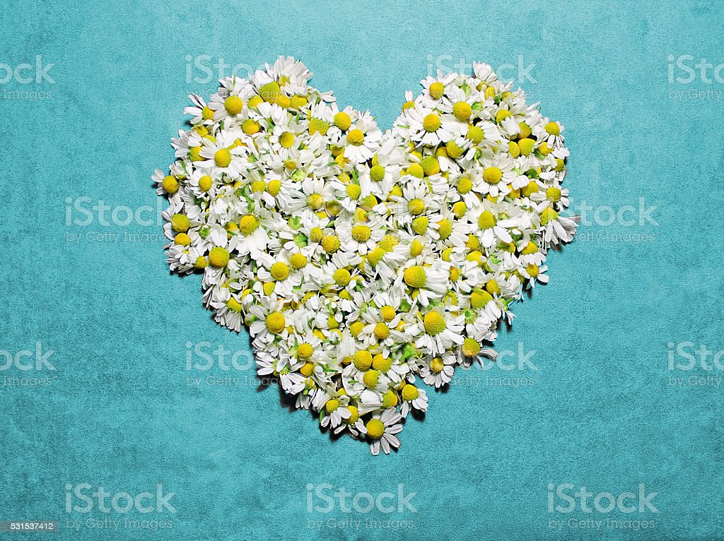 Heart shape from camomile flowers. stock photo