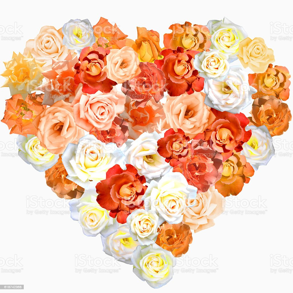 Heart shape made of multicolored roses stock photo