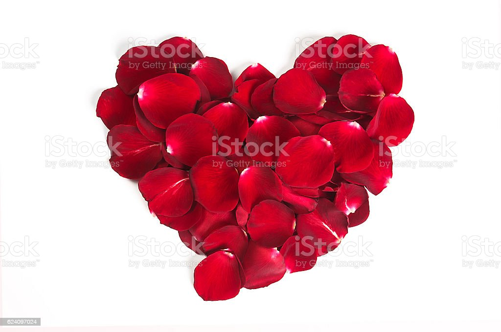 Heart shape rose leaves isolated stock photo