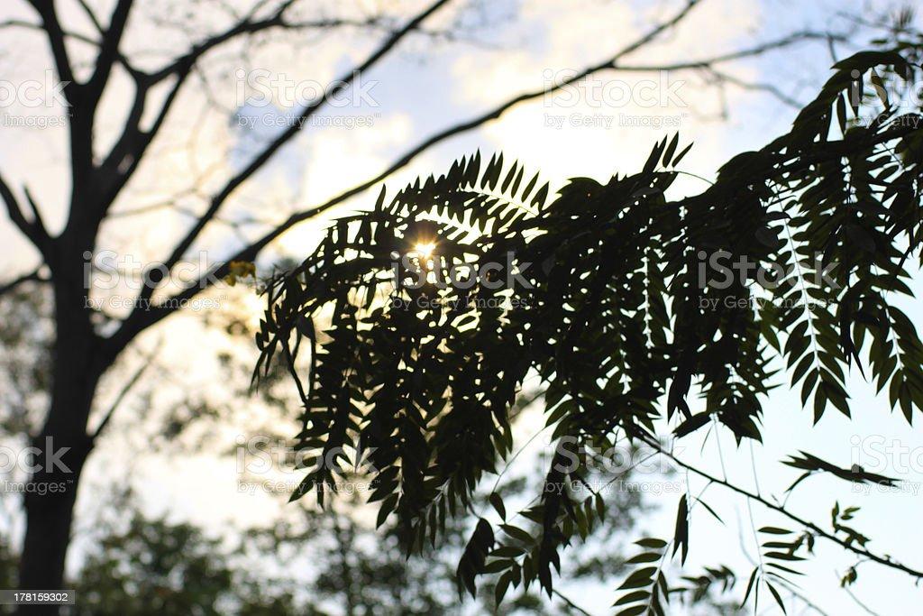 Heart Shape Sunlight with Tree Shadow royalty-free stock photo