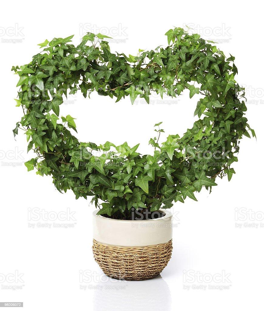 Heart shaped plant royalty-free stock photo