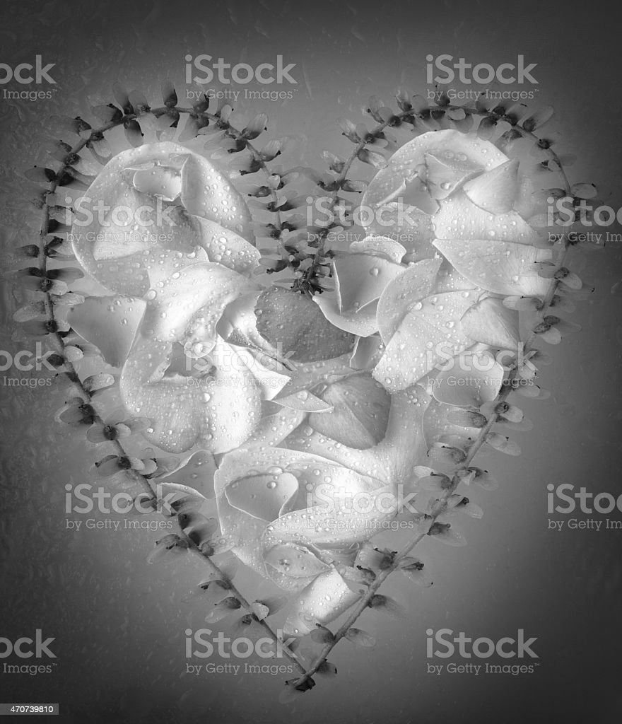 Heart shaped rose petals and china wingnut stock photo