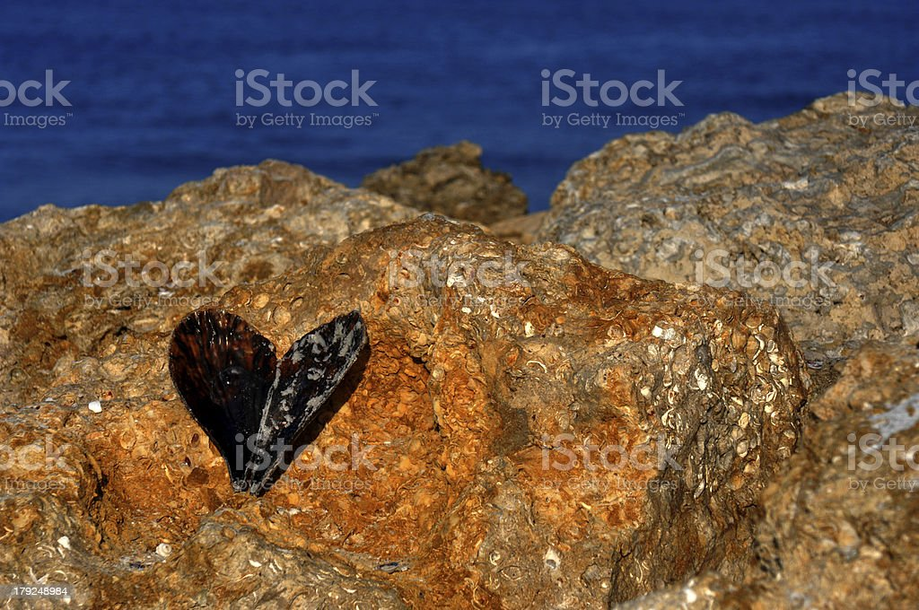 Heart shaped sea shell on coral rock by ocean. stock photo