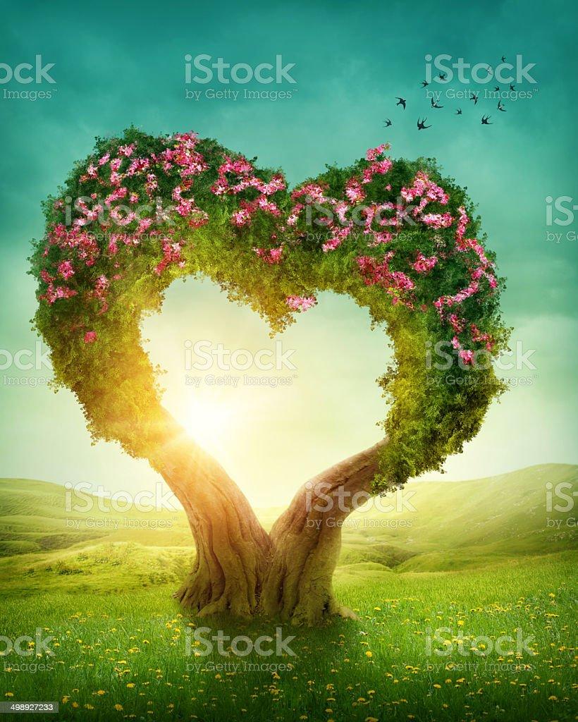 Heart shaped tree stock photo