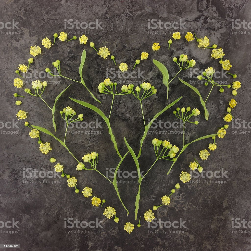 Heart symbol made of yellow linden flowers. Flat lay. stock photo