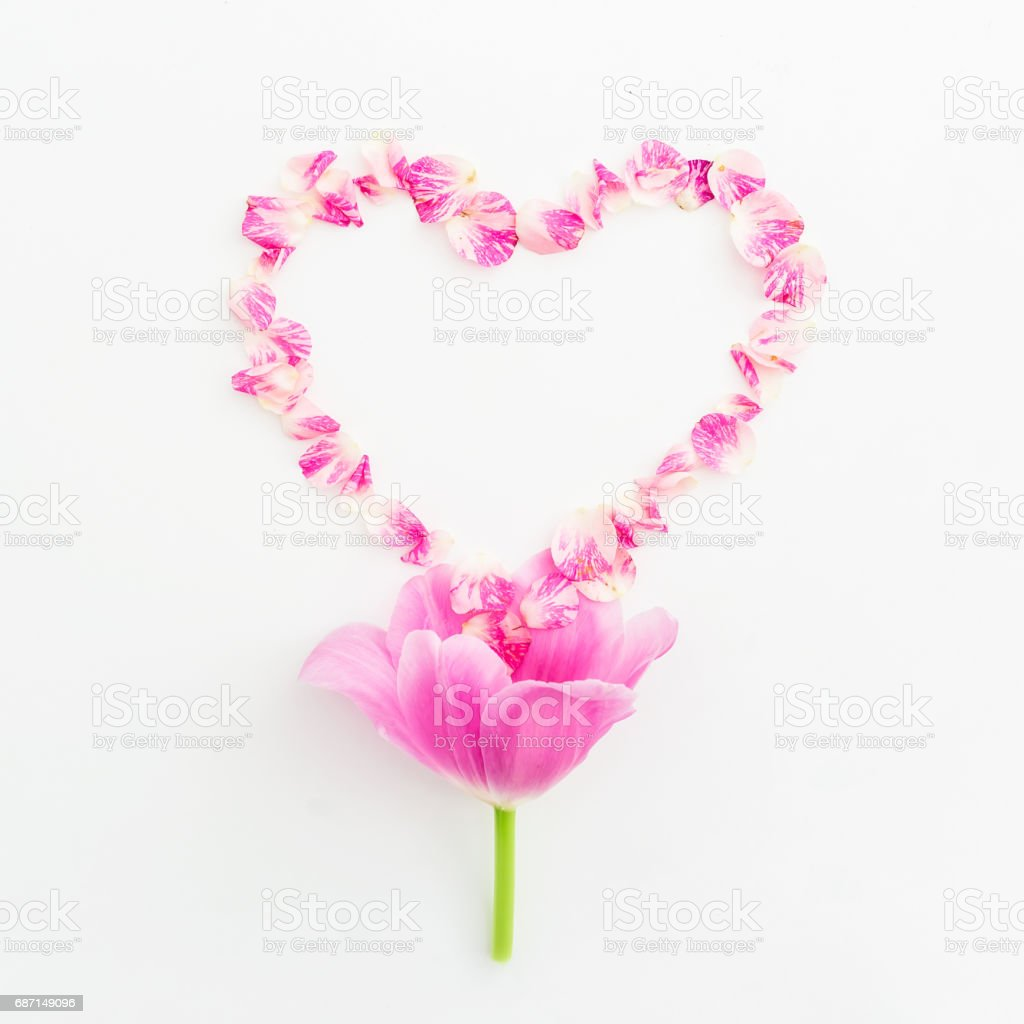 Heart symbol of roses petals and tulip flower on white background. Flat lay, Top view stock photo