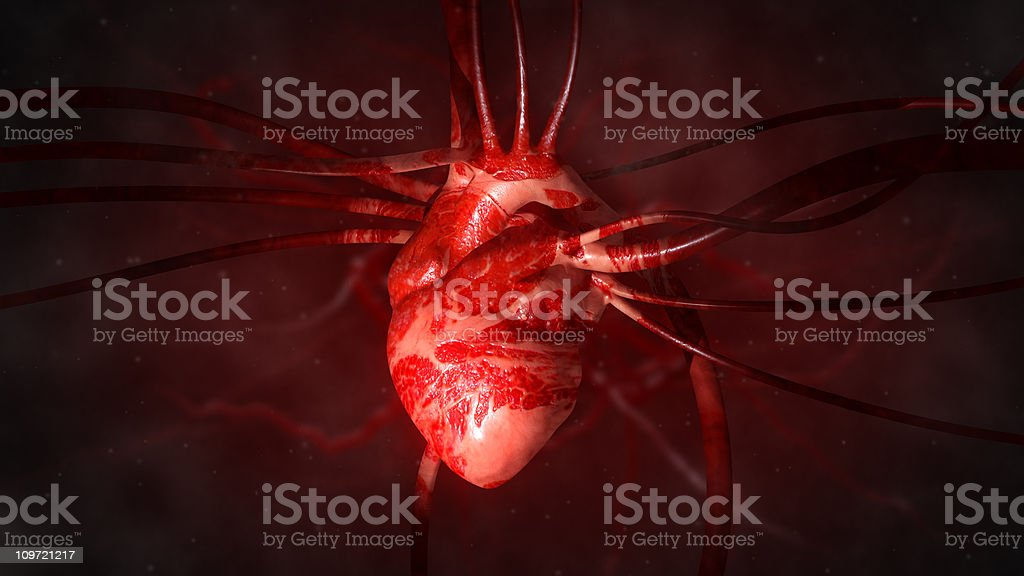 Heart with arteries and veins stock photo