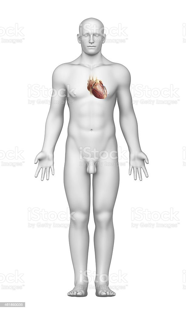 heart with male body stock photo