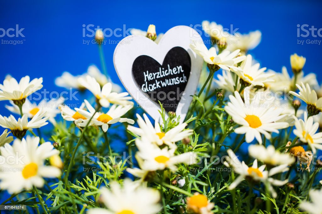 Heart with Margeriten, text, 'Congratulations' stock photo