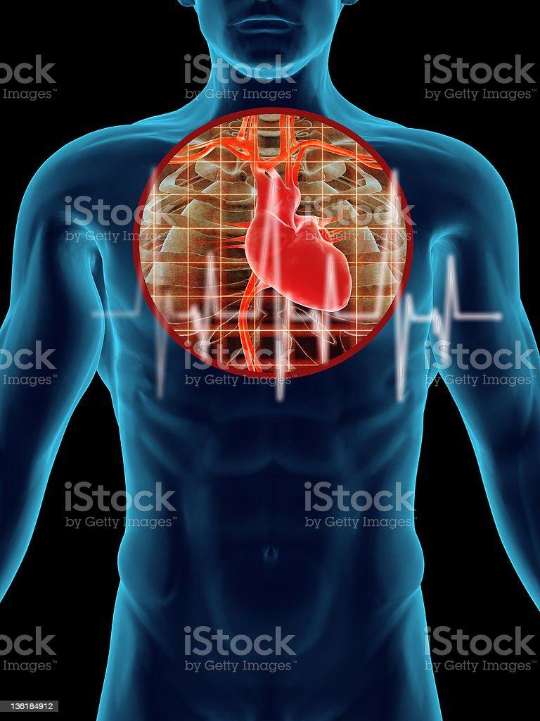 Heart X Ray royalty-free stock photo