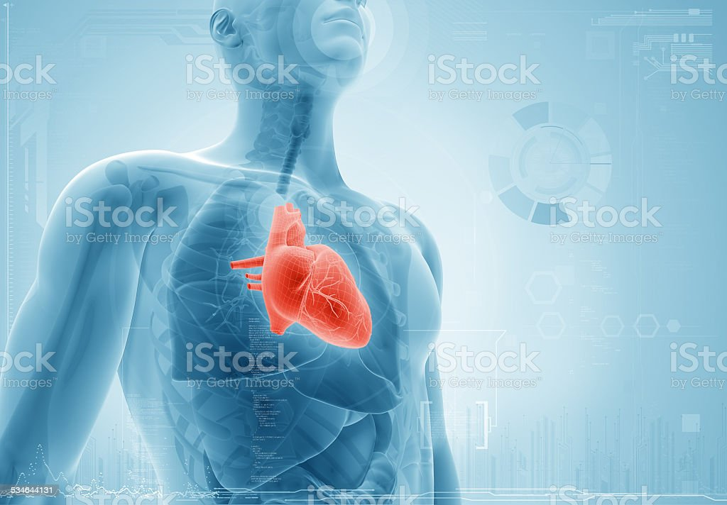 heart; xray concept stock photo