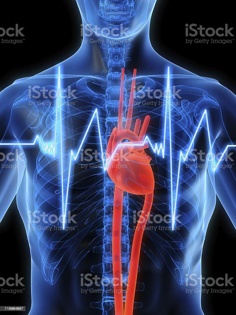heartbeat royalty-free stock photo