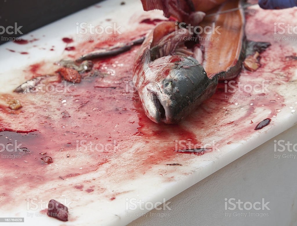 heartless coho salmon filleted stock photo