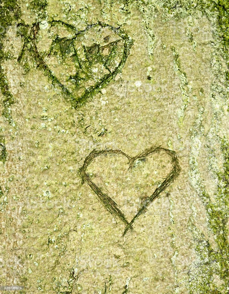 hearts in a tree trunk stock photo