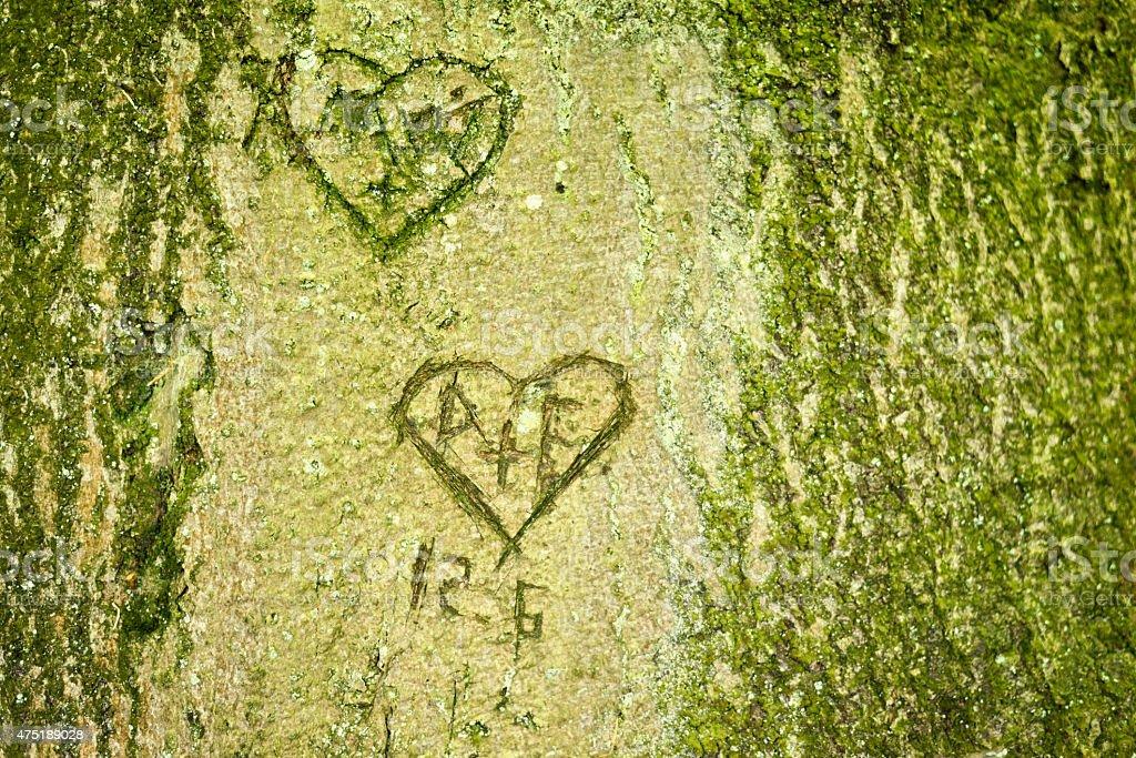 hearts on a tree turn stock photo