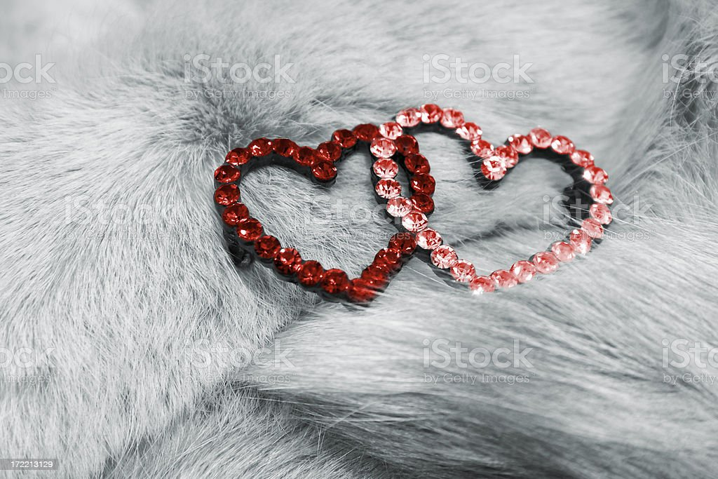 Hearts on the fur - 4 royalty-free stock photo