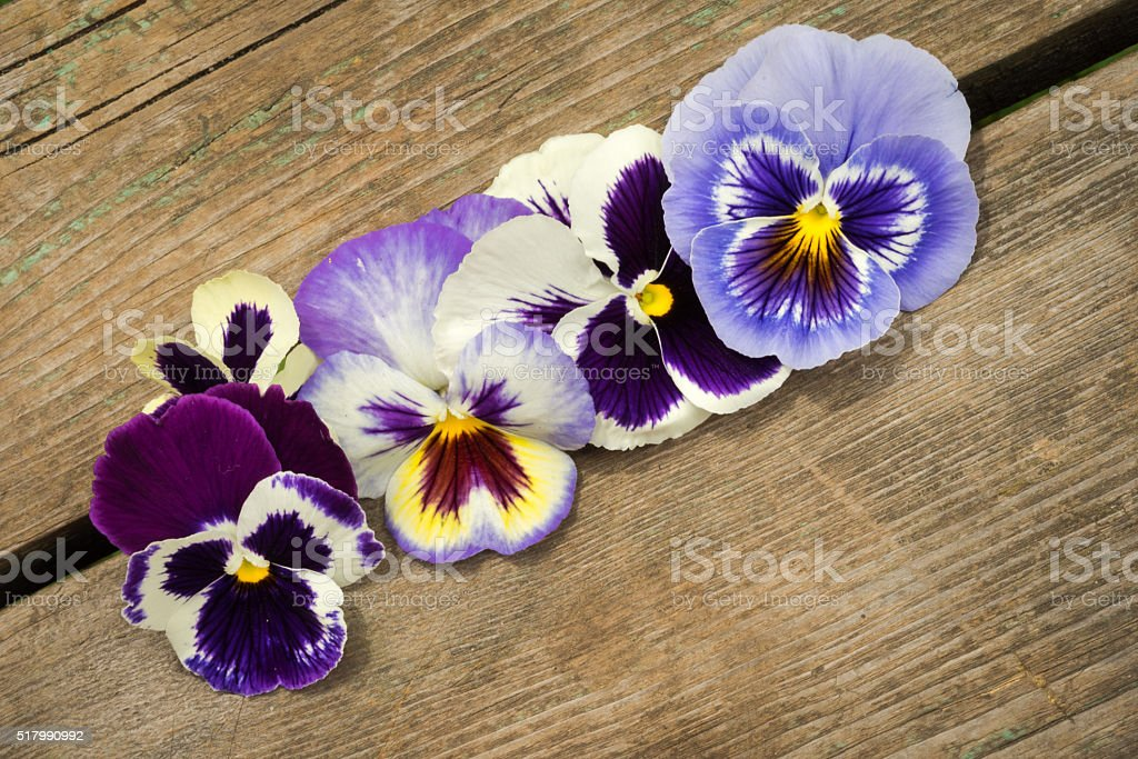 heartsease flowers on the wooden table stock photo