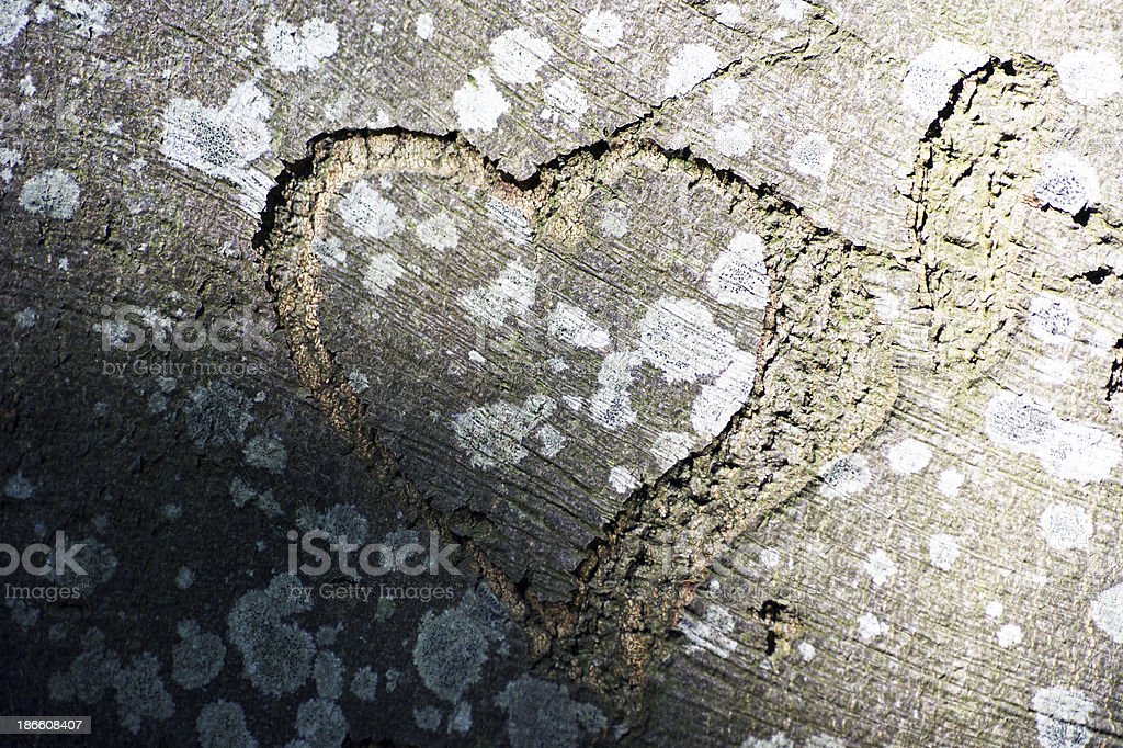 heartshape cutout in a tree royalty-free stock photo