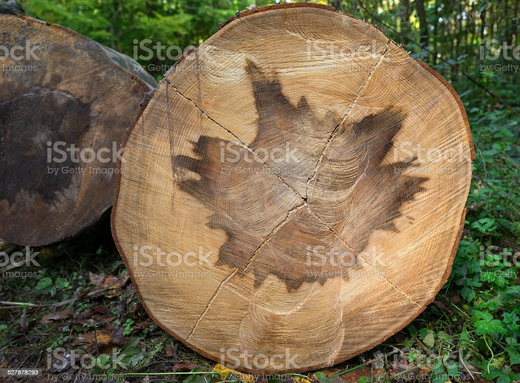 Heartwood pattern in a tree trunk royalty-free stock photo