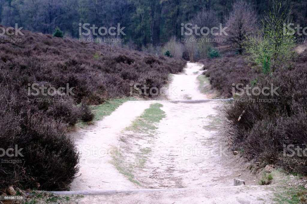 Heath and path at the Posbank in Rheden, National park Veluwe, Netherlands stock photo
