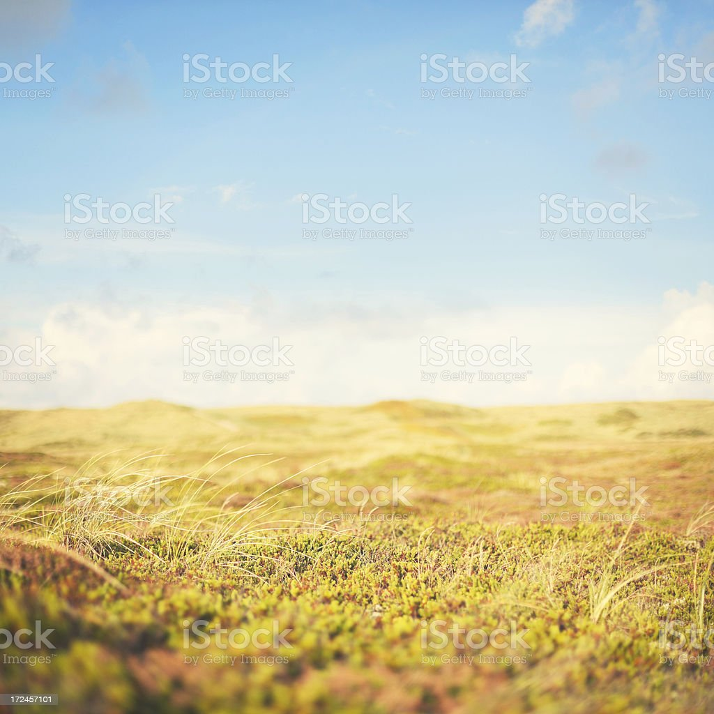 Heather by the way in landscape royalty-free stock photo