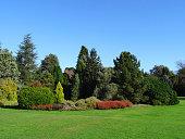 Heather flowers (flowering erica) / dwarf conifer rockery garden, ericaceous-plants, lawn