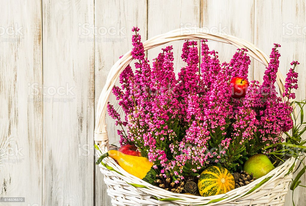 Heather flowers in basket isolated on rustic wood background. stock photo