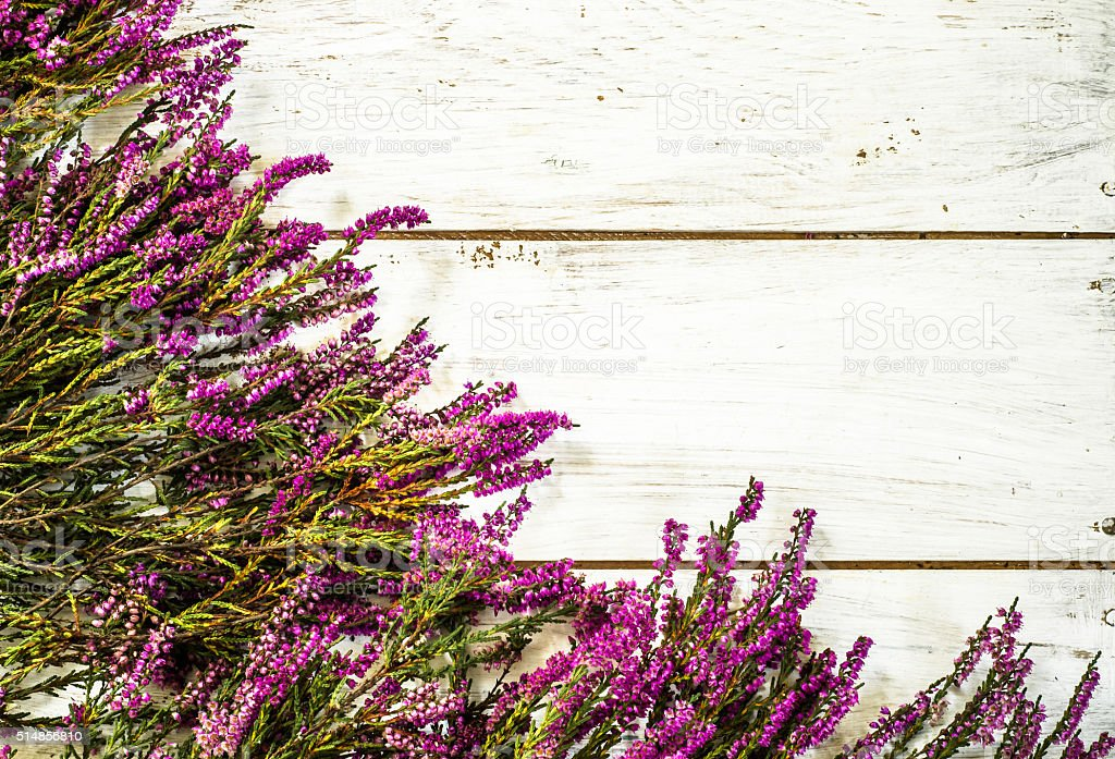 Heather flowers on white wooden background. stock photo