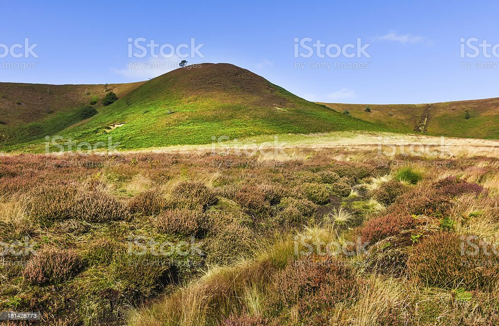 Heather in bloom, North York Moors, Yorkshire, UK. royalty-free stock photo