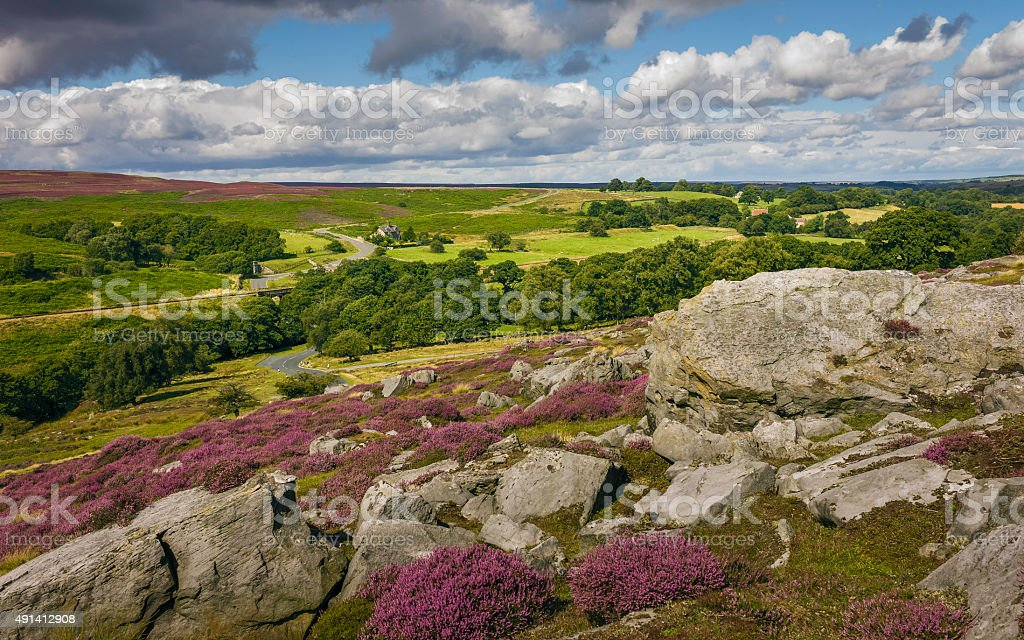Heather in bloom over the moors, Yorkshire, UK. stock photo