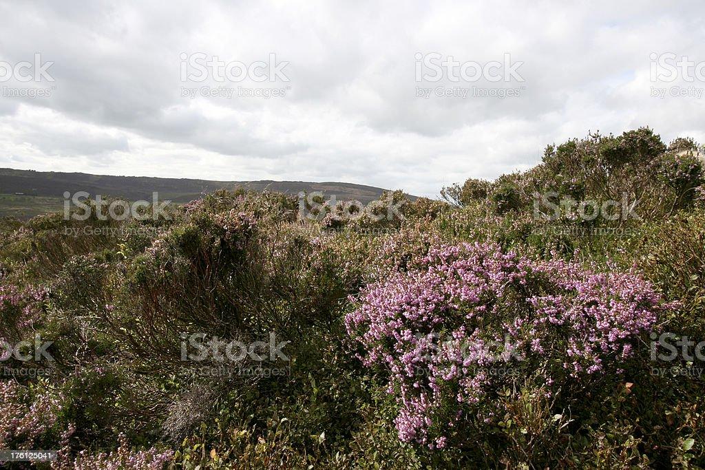 Heather Moorland, Peak District National Park stock photo