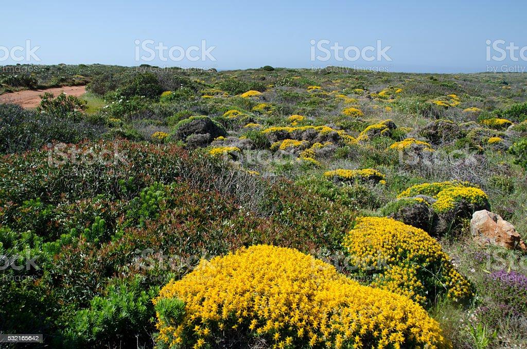 Heathland along the Portuguese coast in the Algarve stock photo