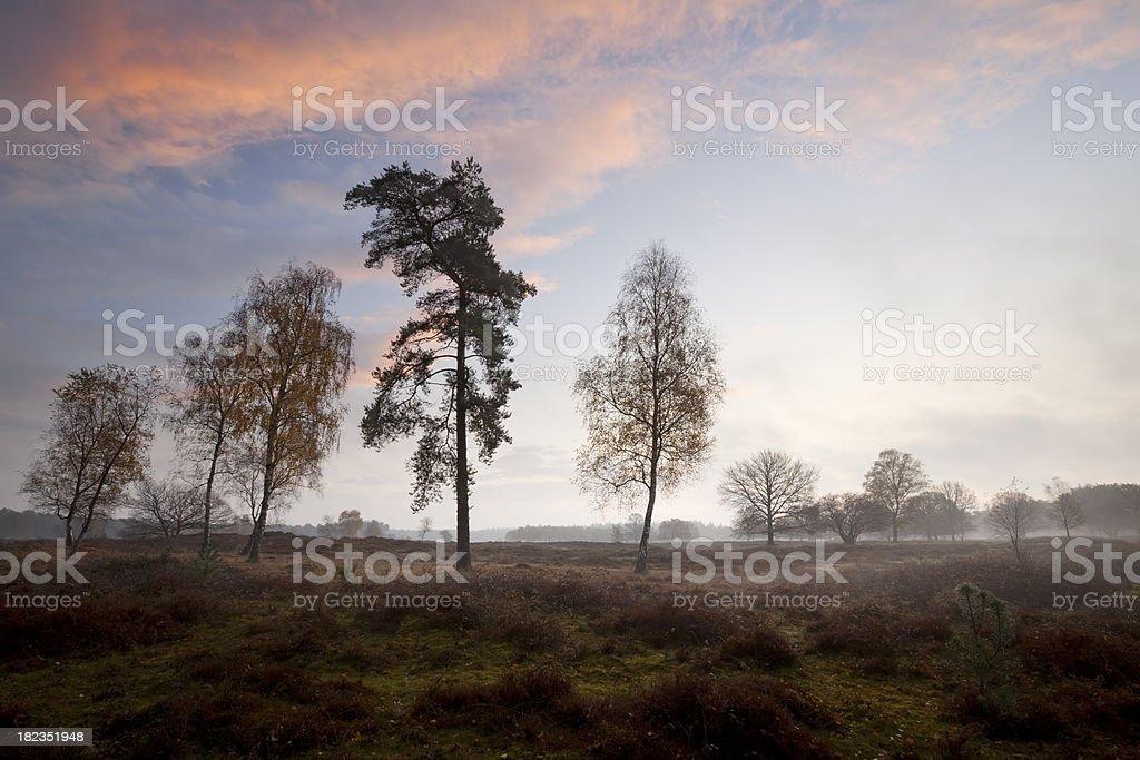 Heathland at sunrise near Hilversum, The Netherlands royalty-free stock photo