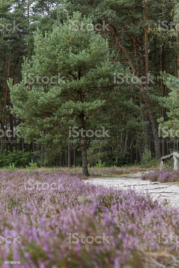 Heathland in northern Germany royalty-free stock photo