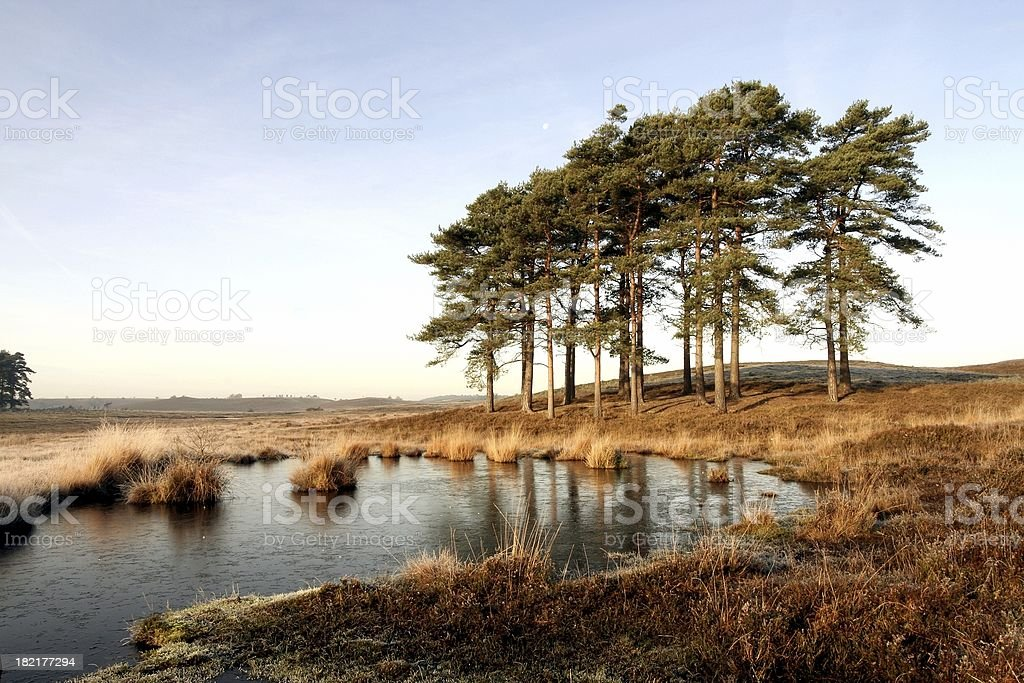 Heathland Pool royalty-free stock photo