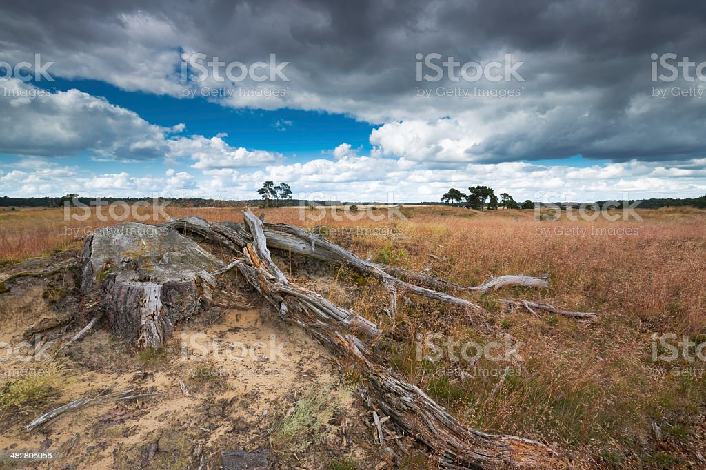 Heathland with tree trunk on the foreground with a dark sky. stock photo