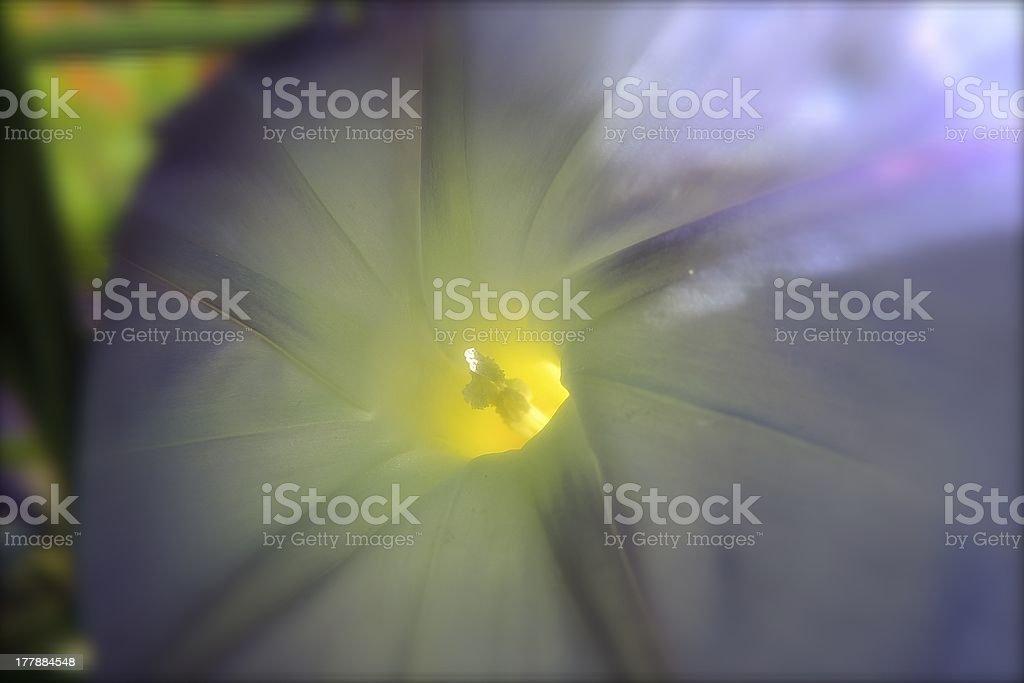 Heavenly Morning Star stock photo