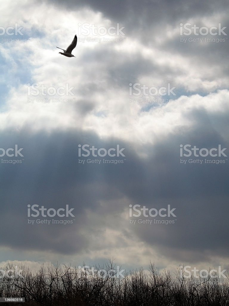 Heavenly Rays royalty-free stock photo