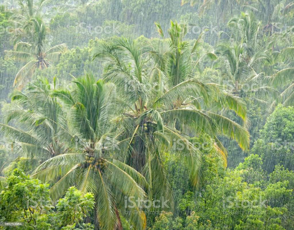 Heavy Monsoon Rain in the Jungle (XXXL) stock photo