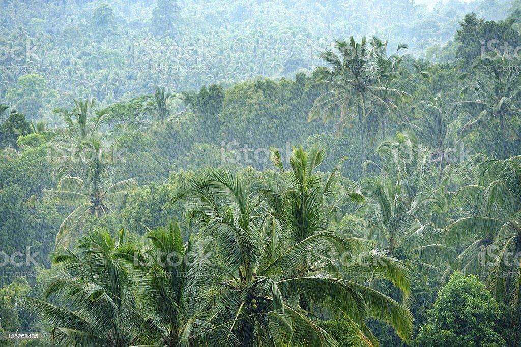 Heavy Monsoon Rain in the Jungle (XXXL) royalty-free stock photo