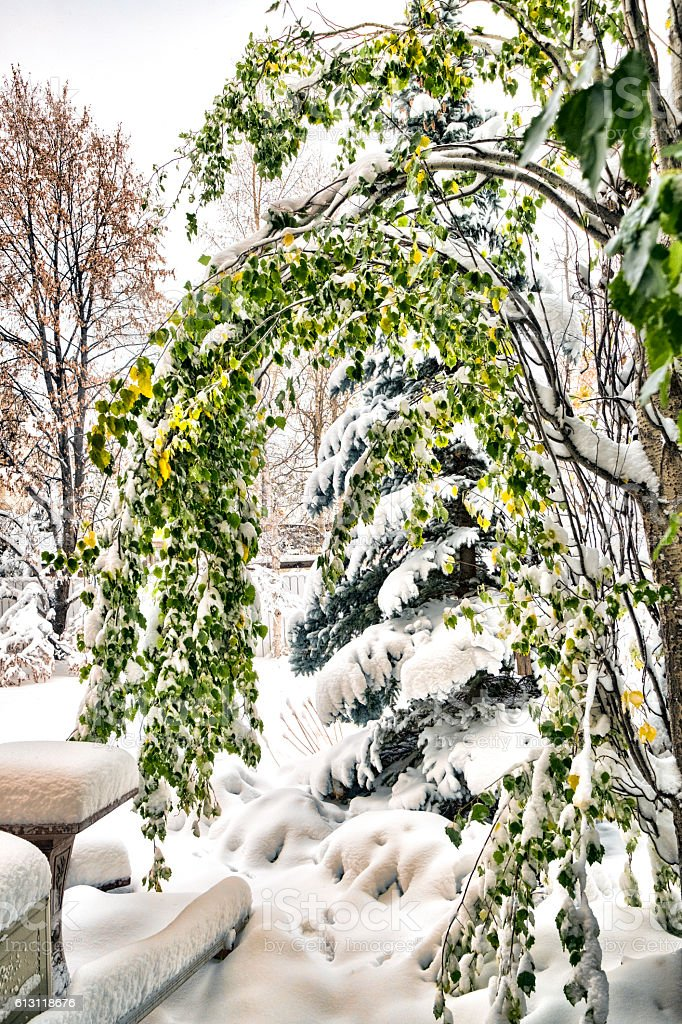 Heavy Snow Along Sidewalk With Bent Trees stock photo