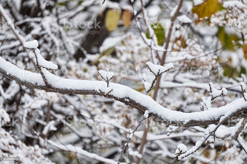 Heavy Snow and Horizontal Tree Branch stock photo