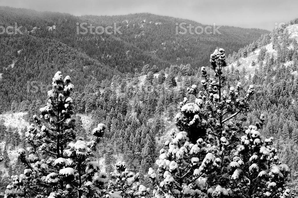 Heavy Snow royalty-free stock photo