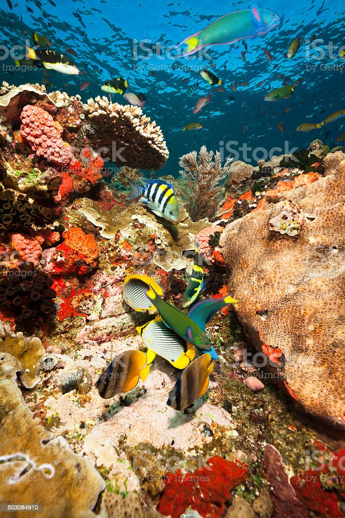 Heavy Traffic, Fishes at the Reef, Komodo National Park, Indonesia stock photo