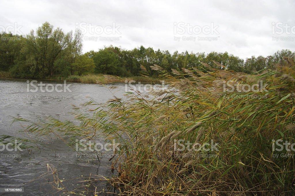 Heavy wind near the lake stock photo