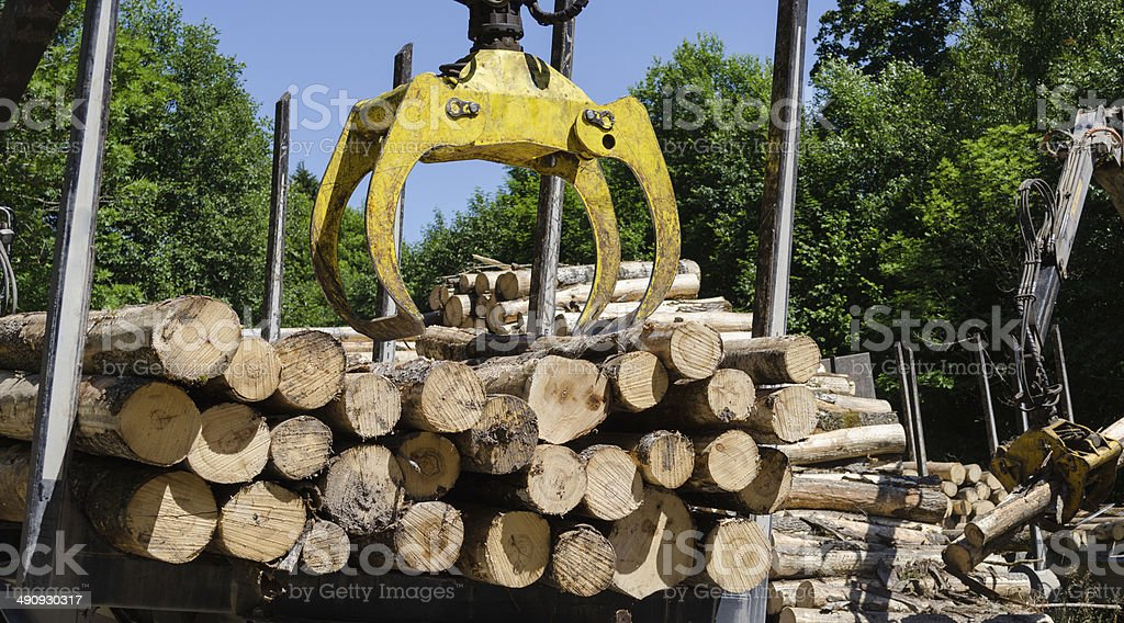 heavy work equipment loading with clipper cut logs stock photo