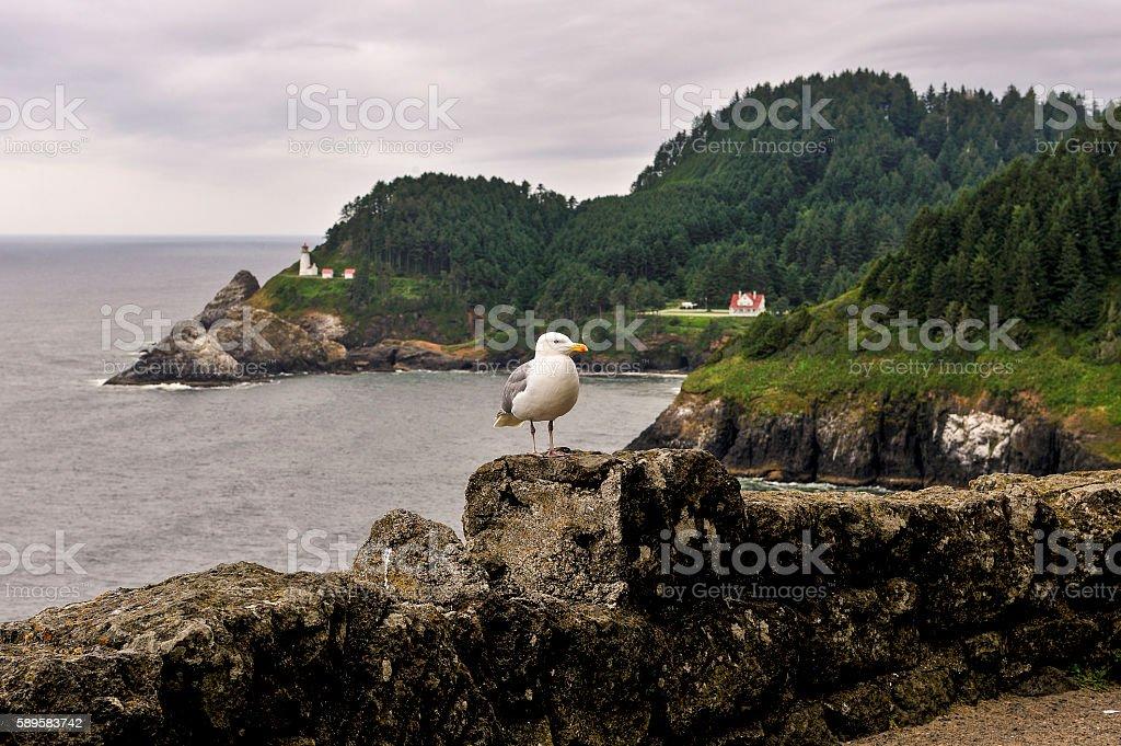 Heceta Head Lighthouse and Seagull, Oregon coast stock photo